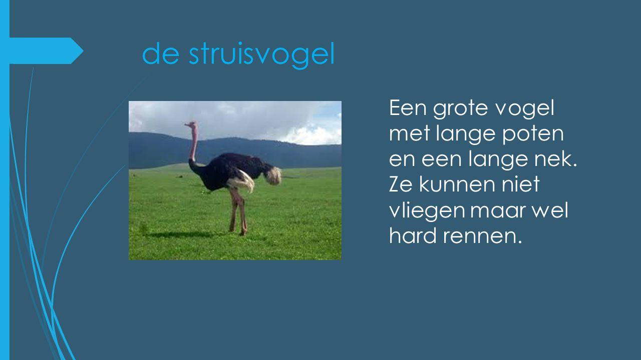 de struisvogel Een grote vogel met lange poten en een lange nek.