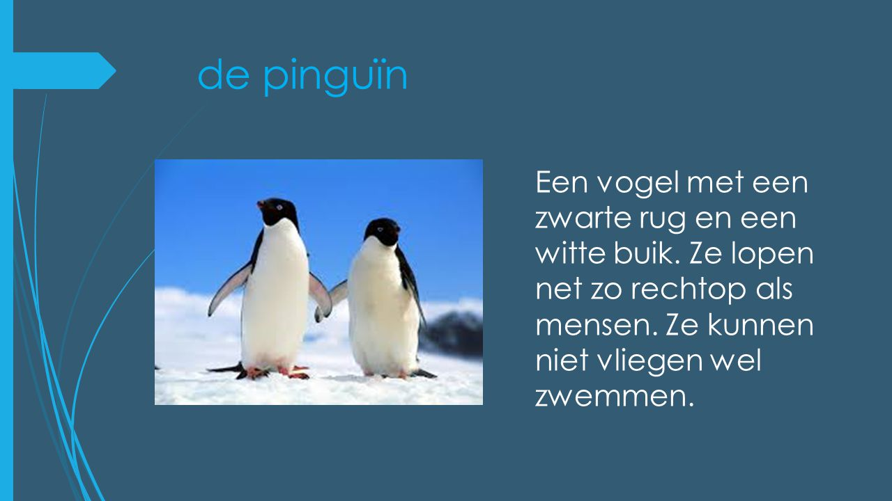 de pinguïn Een vogel met een zwarte rug en een witte buik.