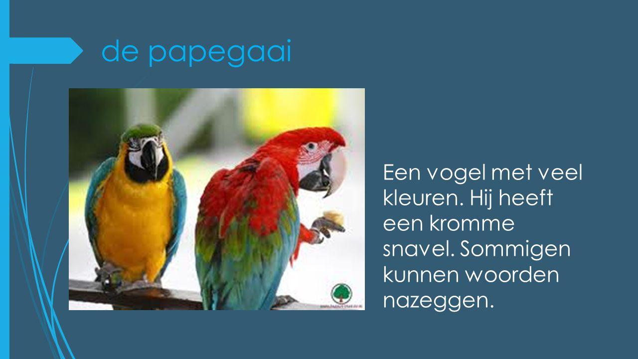 de papegaai Een vogel met veel kleuren. Hij heeft een kromme snavel.