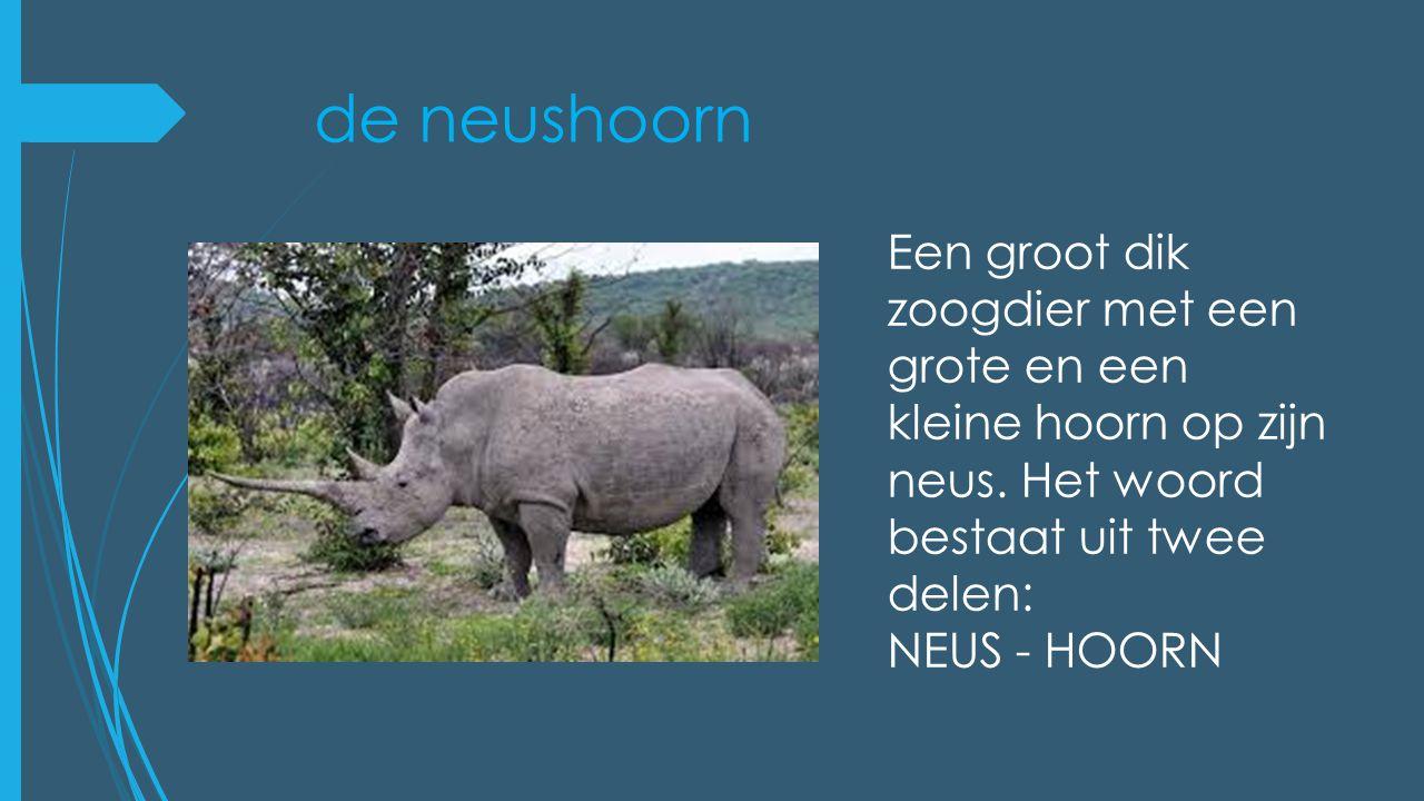 de neushoorn Een groot dik zoogdier met een grote en een kleine hoorn op zijn neus. Het woord bestaat uit twee delen: