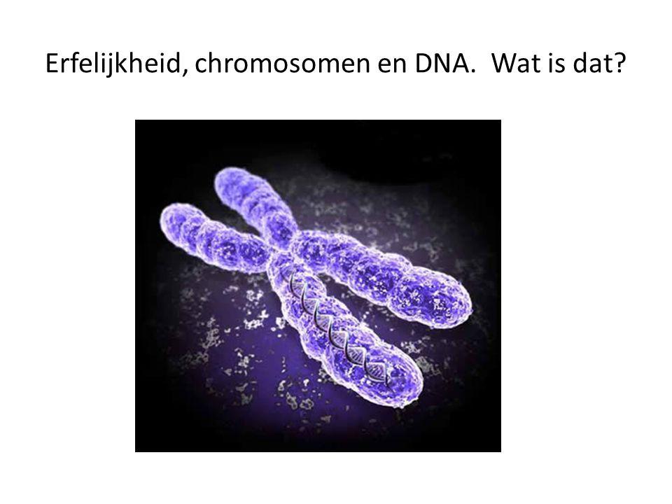 Erfelijkheid, chromosomen en DNA. Wat is dat
