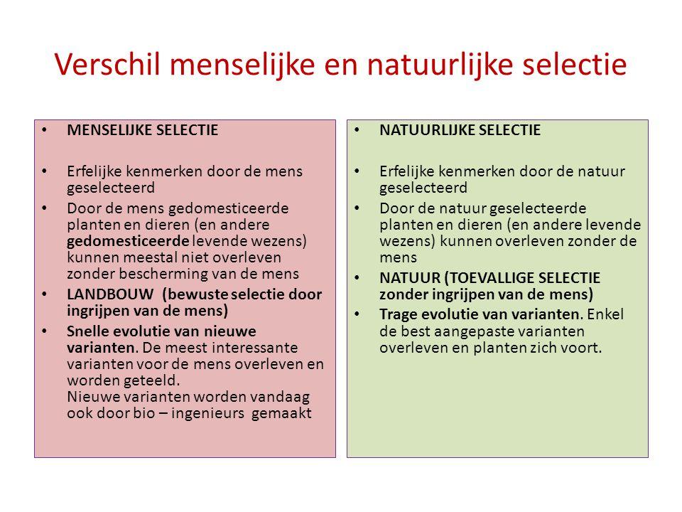 Verschil menselijke en natuurlijke selectie