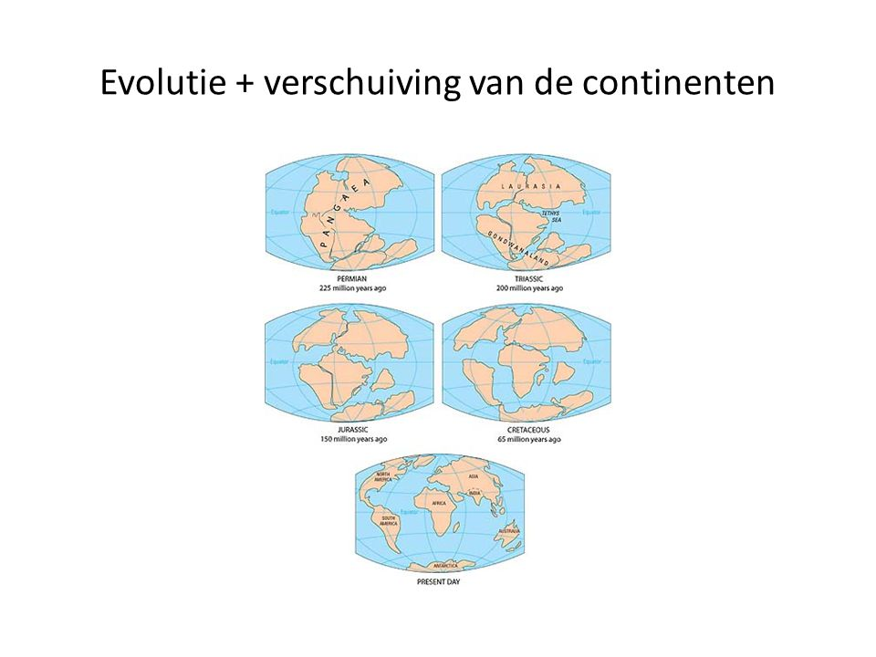 Evolutie + verschuiving van de continenten