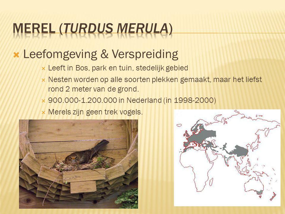 MEREL (Turdus merula) Leefomgeving & Verspreiding