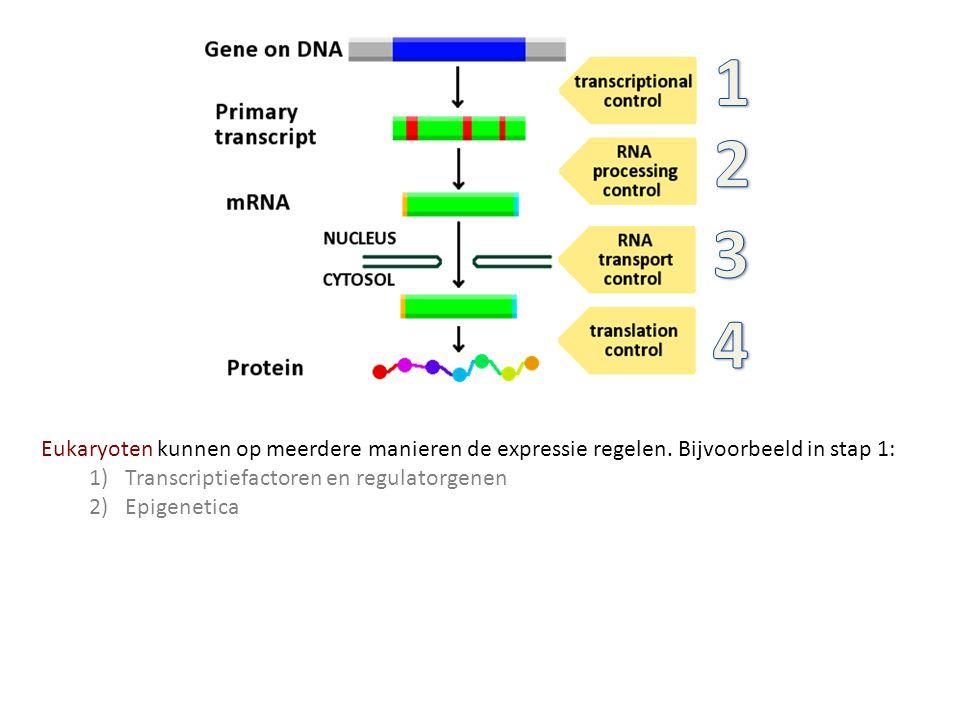 1 2. 3. 4. Eukaryoten kunnen op meerdere manieren de expressie regelen. Bijvoorbeeld in stap 1: Transcriptiefactoren en regulatorgenen.