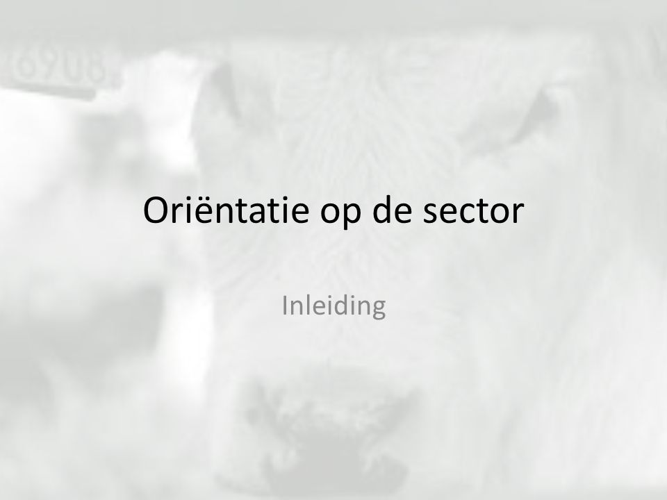 Oriëntatie op de sector