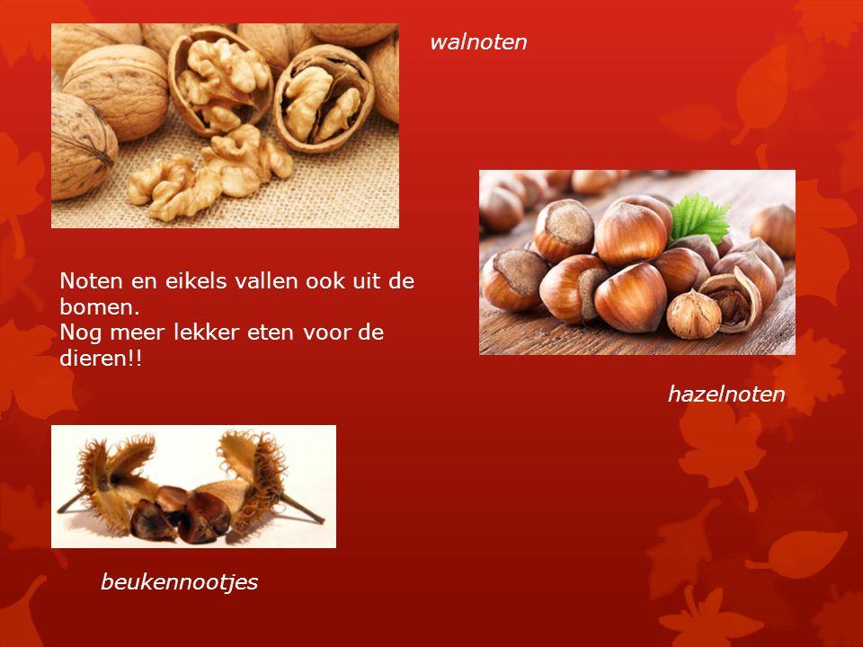 walnoten Noten en eikels vallen ook uit de bomen. Nog meer lekker eten voor de dieren!! hazelnoten.