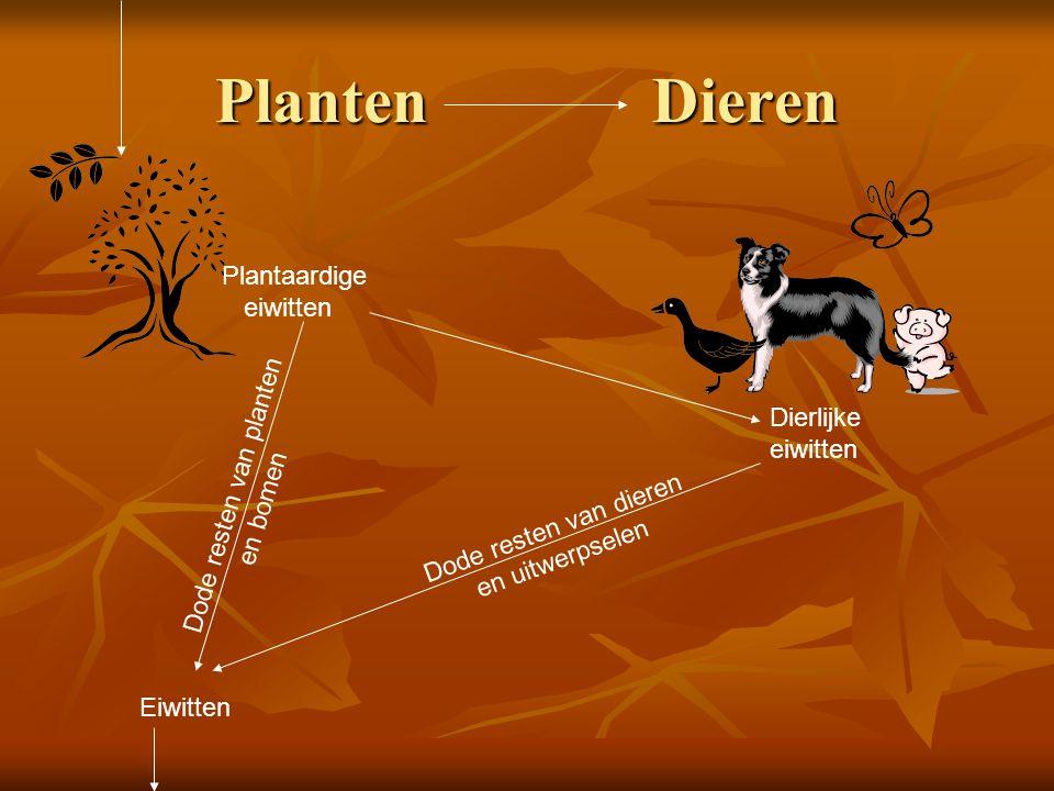 Planten Dieren Plantaardige eiwitten Dode resten van planten en bomen