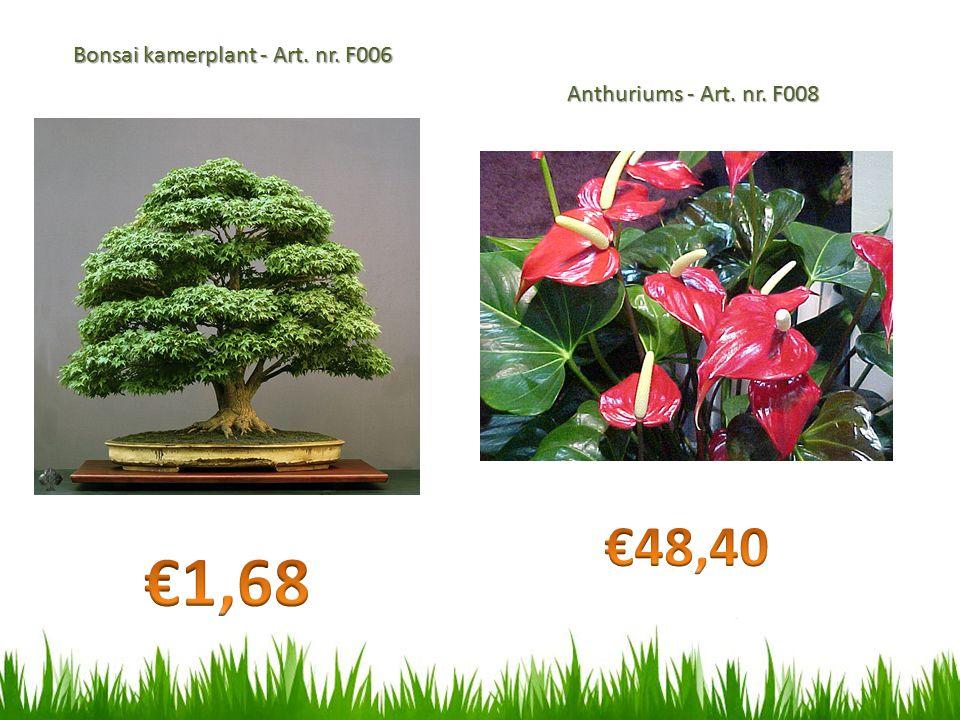 €1,68 €48,40 Bonsai kamerplant - Art. nr. F006