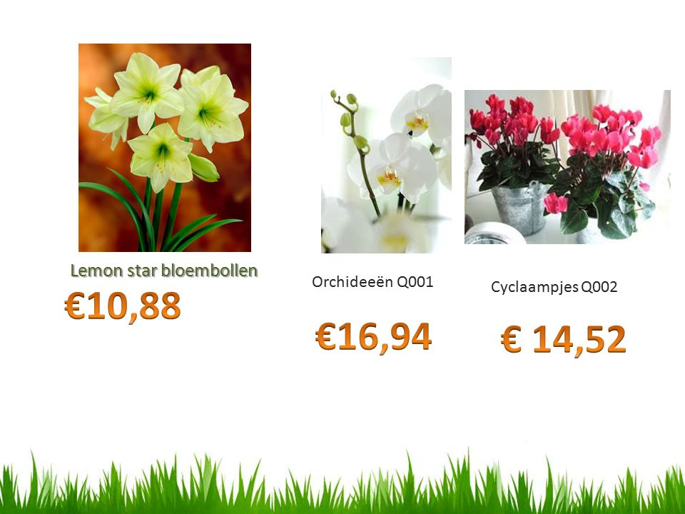 €10,88 €16,94 € 14,52 Lemon star bloembollen Orchideeën Q001