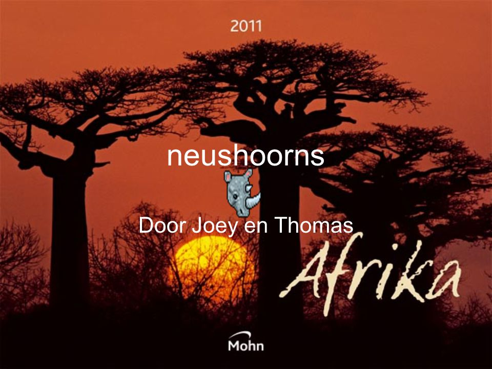 neushoorns Door Joey en Thomas
