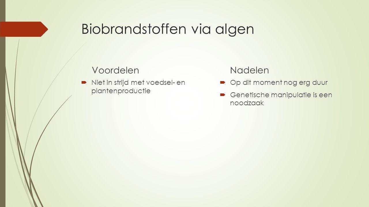Biobrandstoffen via algen