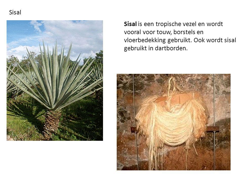 Sisal Sisal is een tropische vezel en wordt vooral voor touw, borstels en vloerbedekking gebruikt.