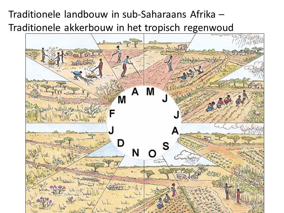 Traditionele landbouw in sub-Saharaans Afrika – Traditionele akkerbouw in het tropisch regenwoud