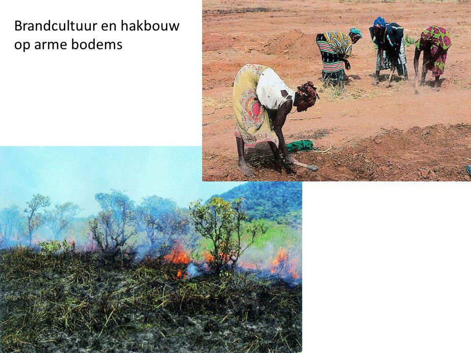 Brandcultuur en hakbouw op arme bodems
