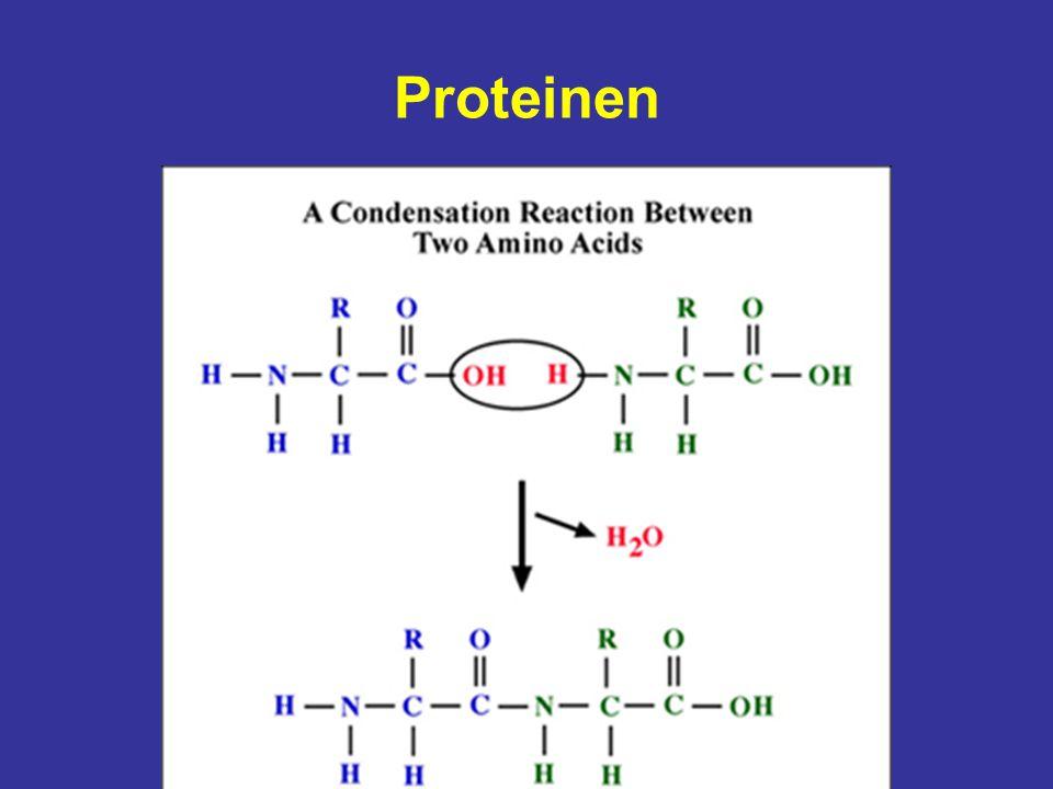 Proteinen