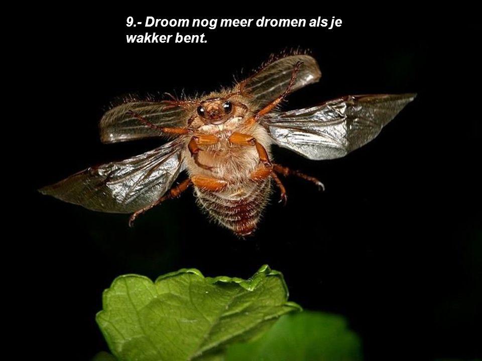 9.- Droom nog meer dromen als je wakker bent.