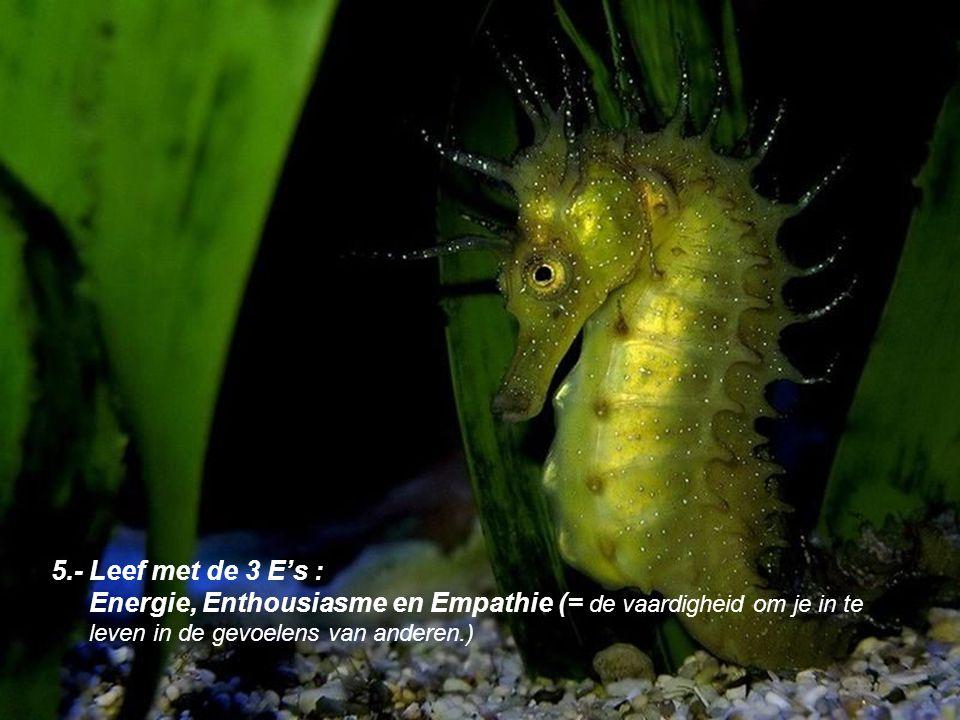 5.- Leef met de 3 E's : Energie, Enthousiasme en Empathie (= de vaardigheid om je in te leven in de gevoelens van anderen.)