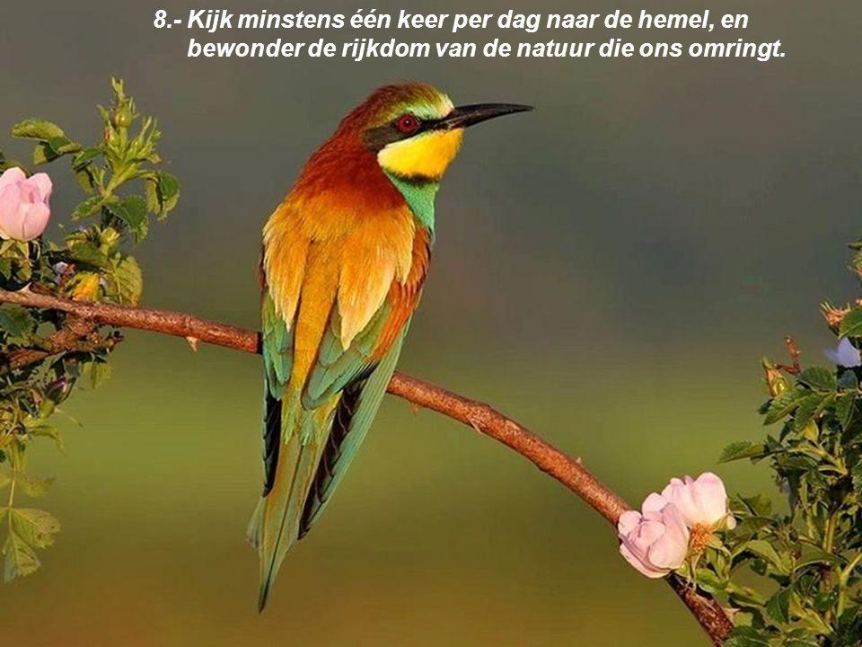 8.- Kijk minstens één keer per dag naar de hemel, en bewonder de rijkdom van de natuur die ons omringt.