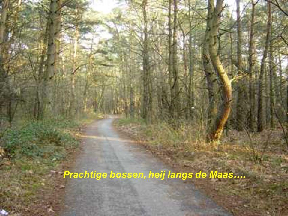 Prachtige bossen, heij langs de Maas….