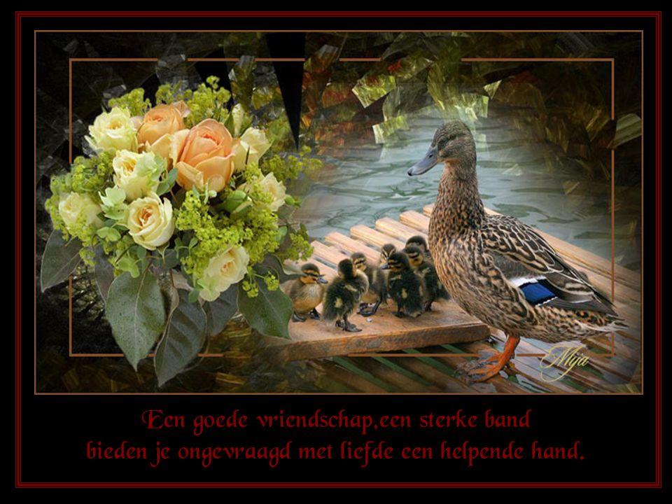 Een goede vriendschap,een sterke band bieden je ongevraagd met liefde een helpende hand.