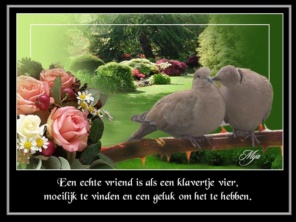 Een echte vriend is als een klavertje vier, moeilijk te vinden en een geluk om het te hebben.