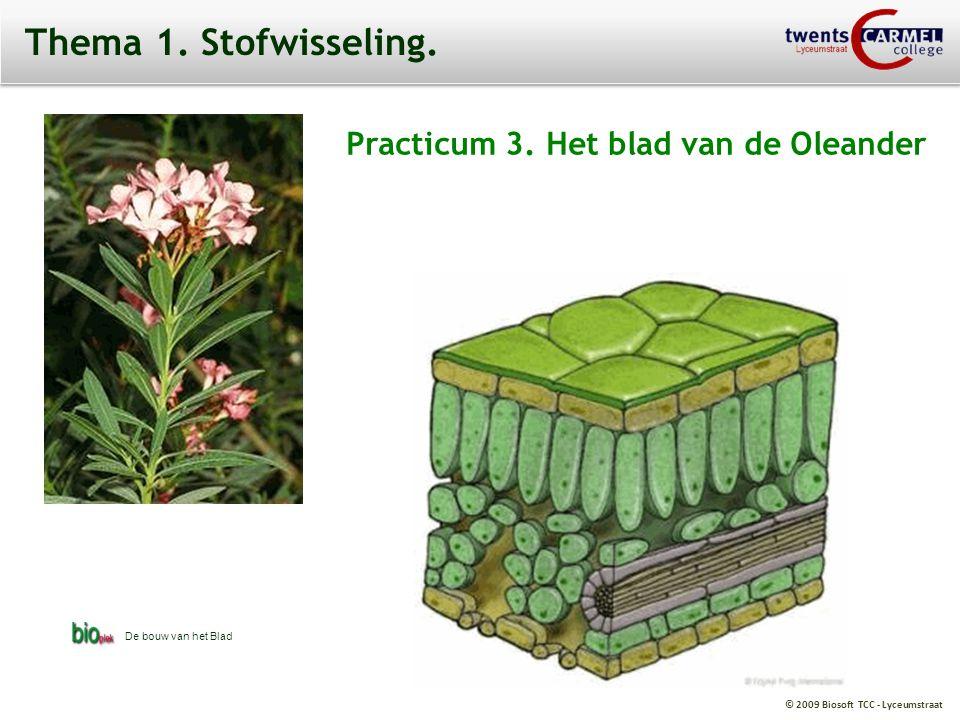 Thema 1. Stofwisseling. Practicum 3. Het blad van de Oleander