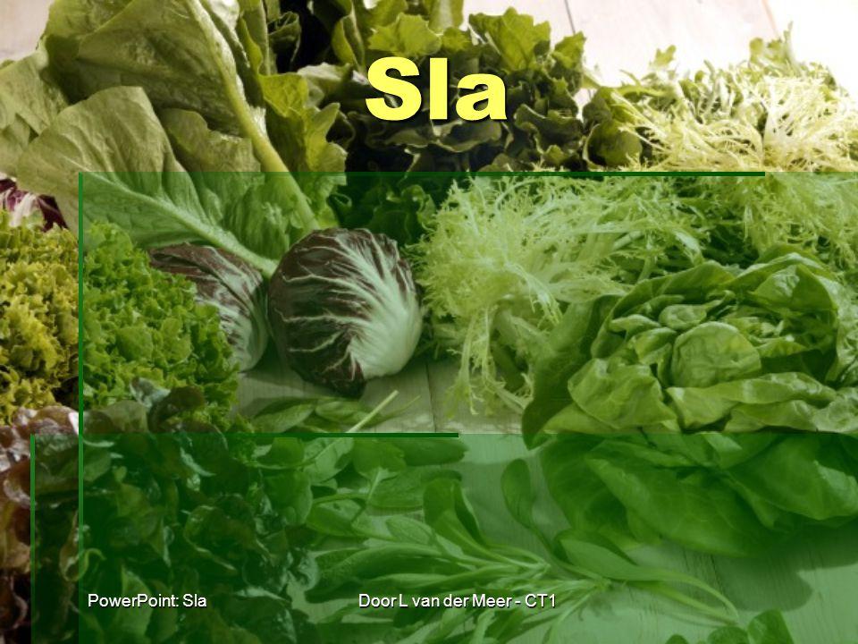 Sla PowerPoint: Sla Door L van der Meer - CT1