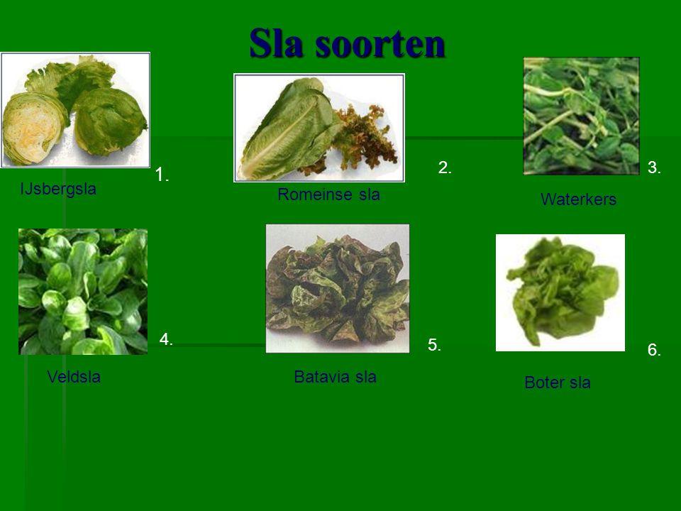 Sla soorten 1. 2. 3. IJsbergsla Romeinse sla Waterkers 4. 5. 6.