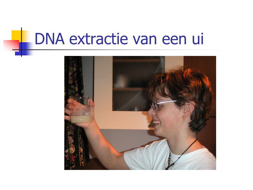 DNA extractie van een ui