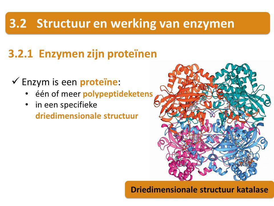 Driedimensionale structuur katalase