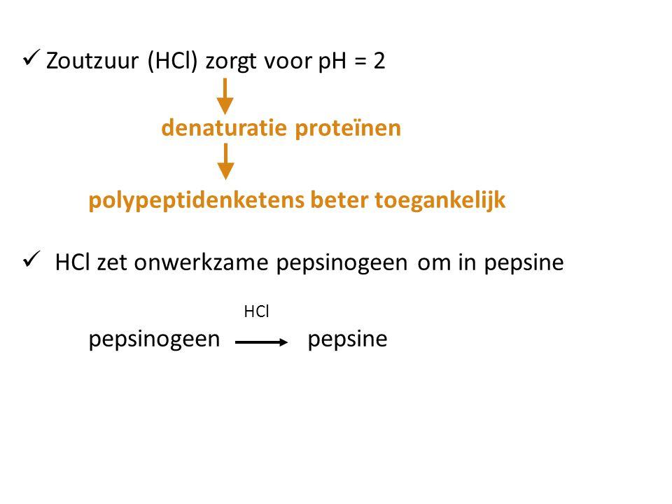 Zoutzuur (HCl) zorgt voor pH = 2 denaturatie proteïnen