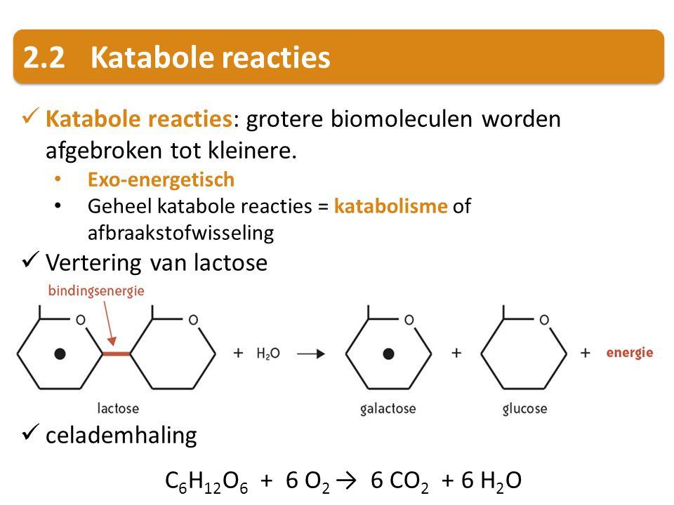 2.2 Katabole reacties Katabole reacties: grotere biomoleculen worden afgebroken tot kleinere. Exo-energetisch.