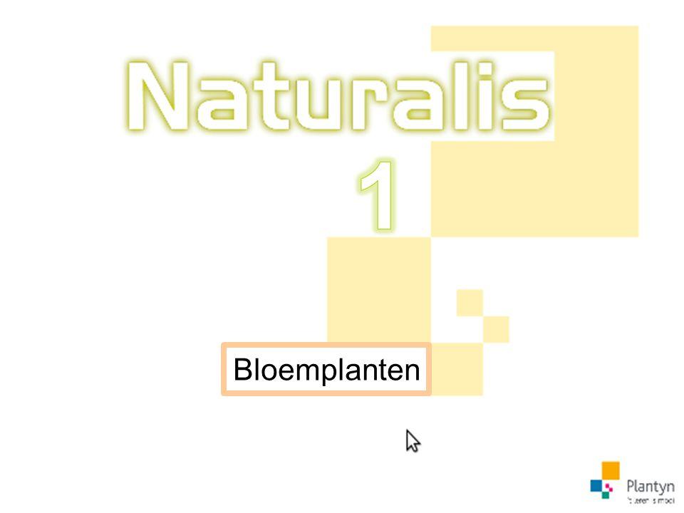 Bloemplanten