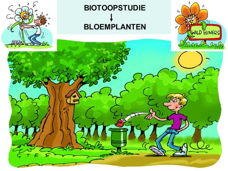 BIOTOOPSTUDIE BLOEMPLANTEN