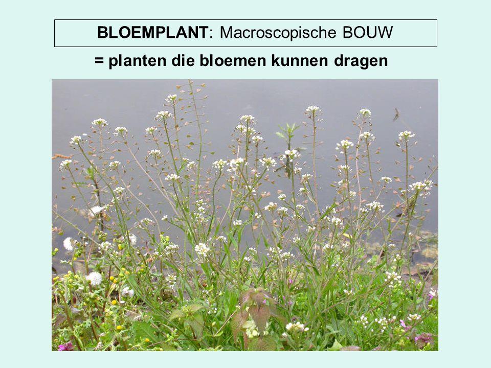 BLOEMPLANT: Macroscopische BOUW