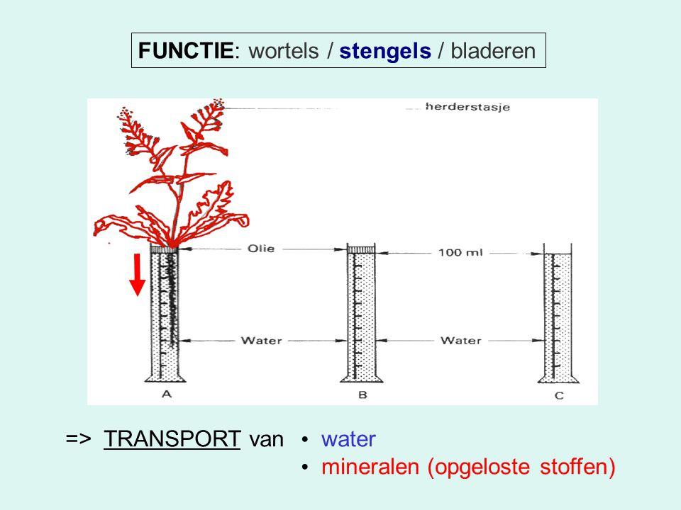 FUNCTIE: wortels / stengels / bladeren