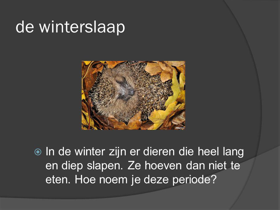 de winterslaap In de winter zijn er dieren die heel lang en diep slapen.