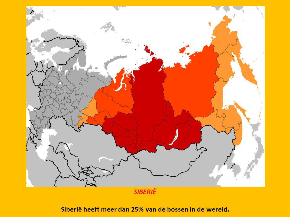 Siberië heeft meer dan 25% van de bossen in de wereld.