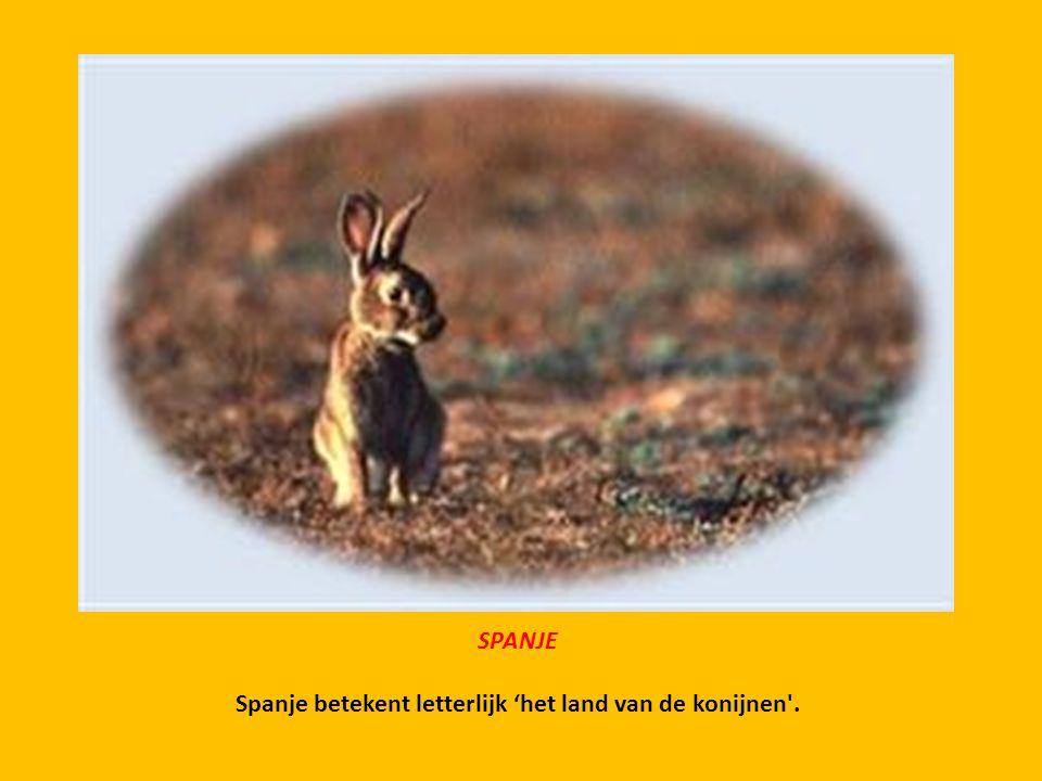 Spanje betekent letterlijk 'het land van de konijnen .