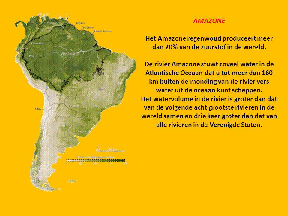 AMAZONE Het Amazone regenwoud produceert meer dan 20% van de zuurstof in de wereld.