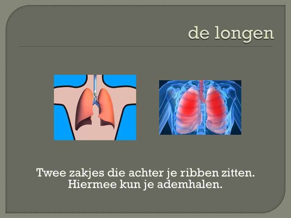 Twee zakjes die achter je ribben zitten. Hiermee kun je ademhalen.