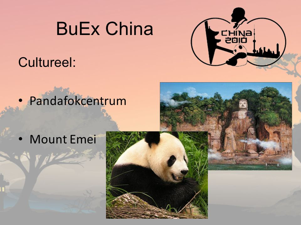 BuEx China Cultureel: Pandafokcentrum Mount Emei