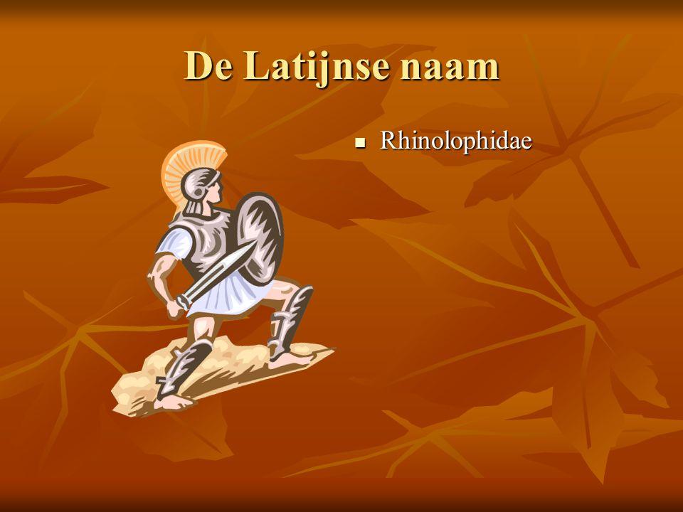 De Latijnse naam Rhinolophidae