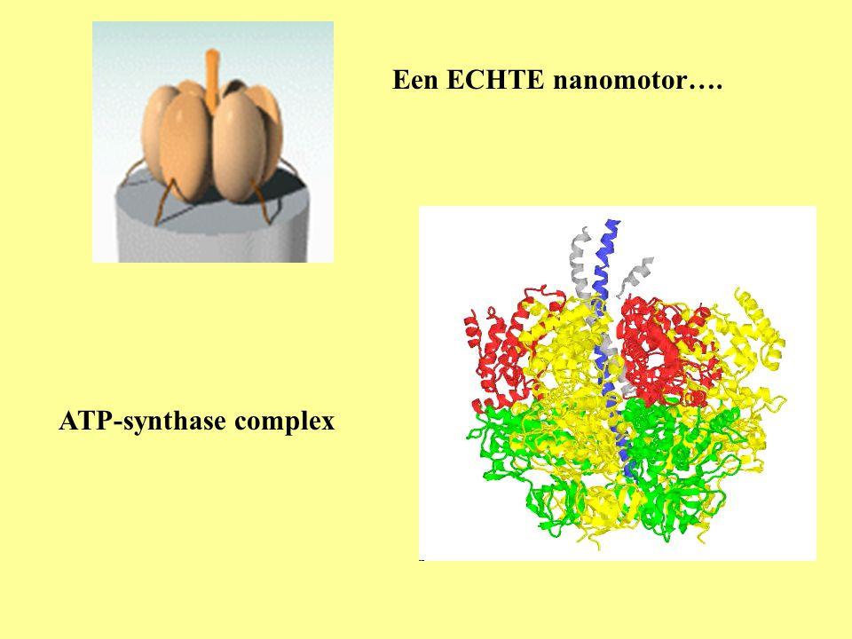 Een ECHTE nanomotor…. ATP-synthase complex