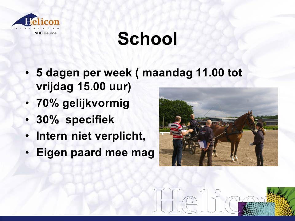 School 5 dagen per week ( maandag 11.00 tot vrijdag 15.00 uur)