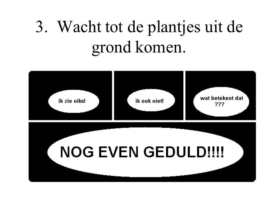 3. Wacht tot de plantjes uit de grond komen.