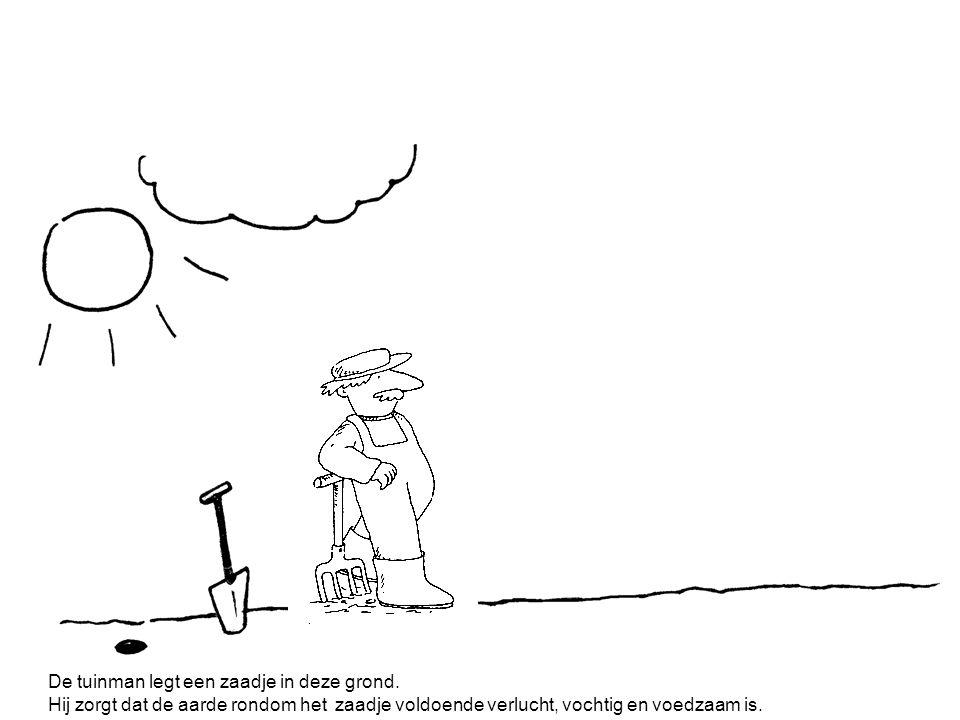 De tuinman legt een zaadje in deze grond.