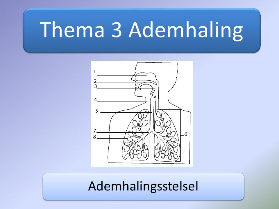 Thema 3 Ademhaling Ademhalingsstelsel