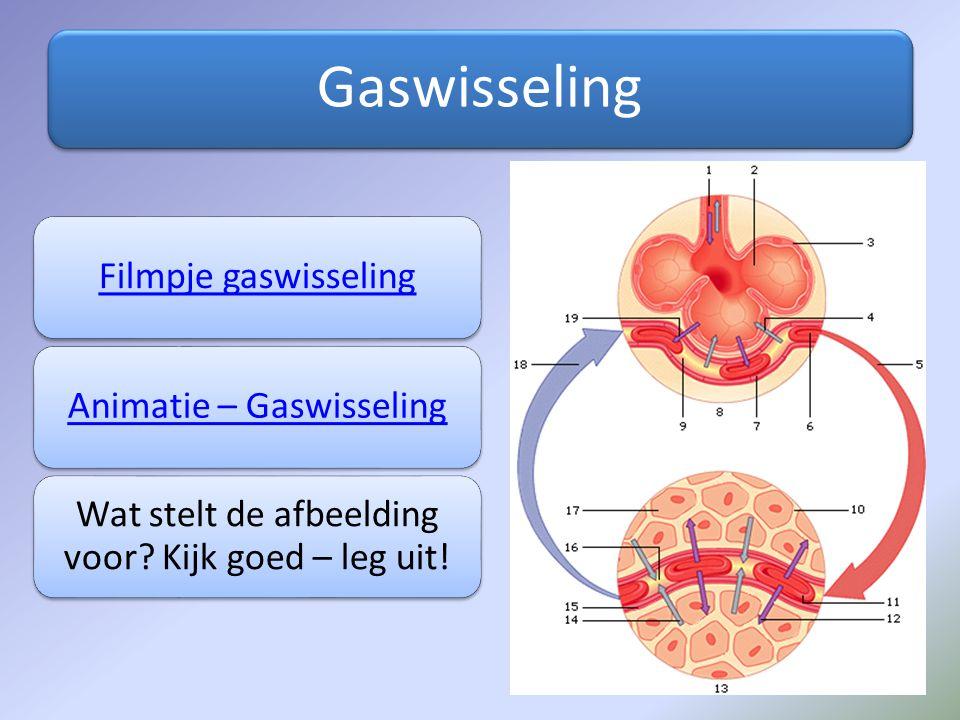Gaswisseling Filmpje gaswisseling Animatie – Gaswisseling